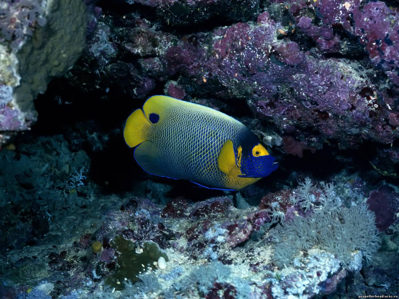 Музыка подводного мира скачать бесплатно mp3